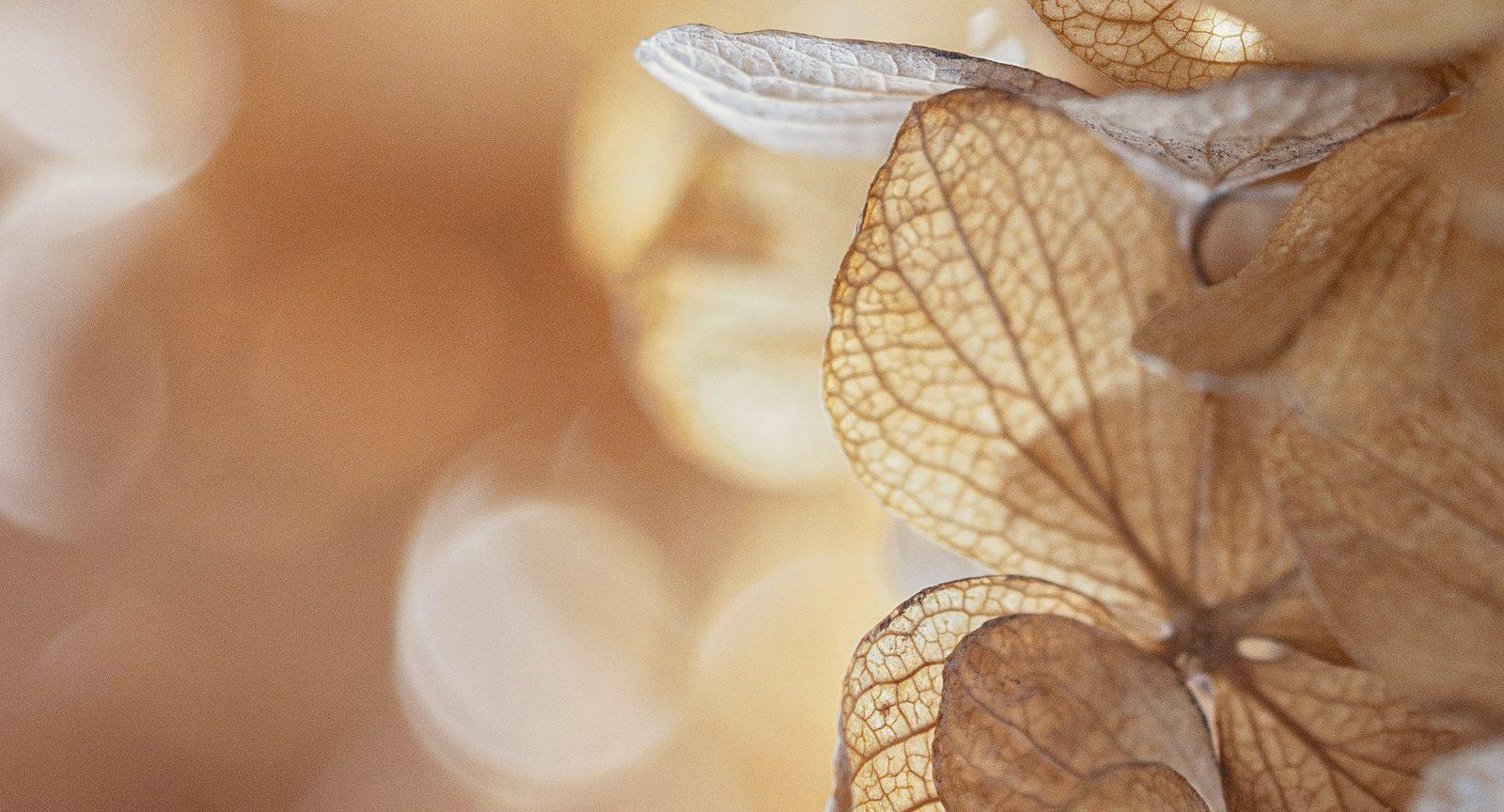 Herbstlieben. Buchcover-Ausschnitt